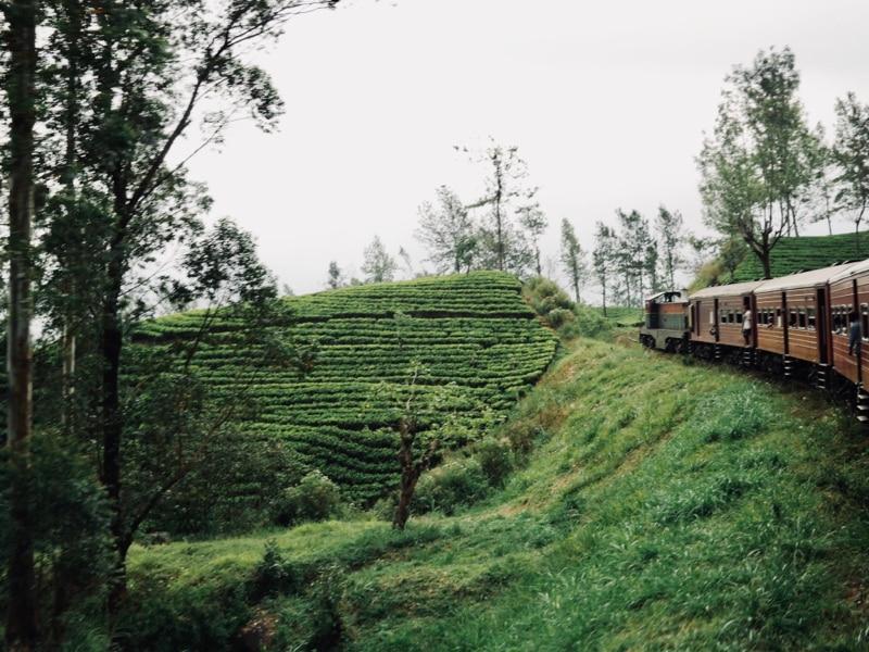 Les plantations de thé Sri Lanka - Chipiron Surf