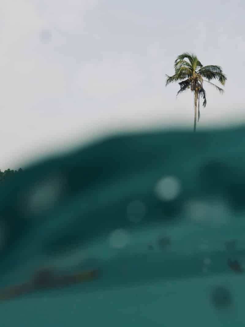 Palm tree aquashot - Chipiron Surf