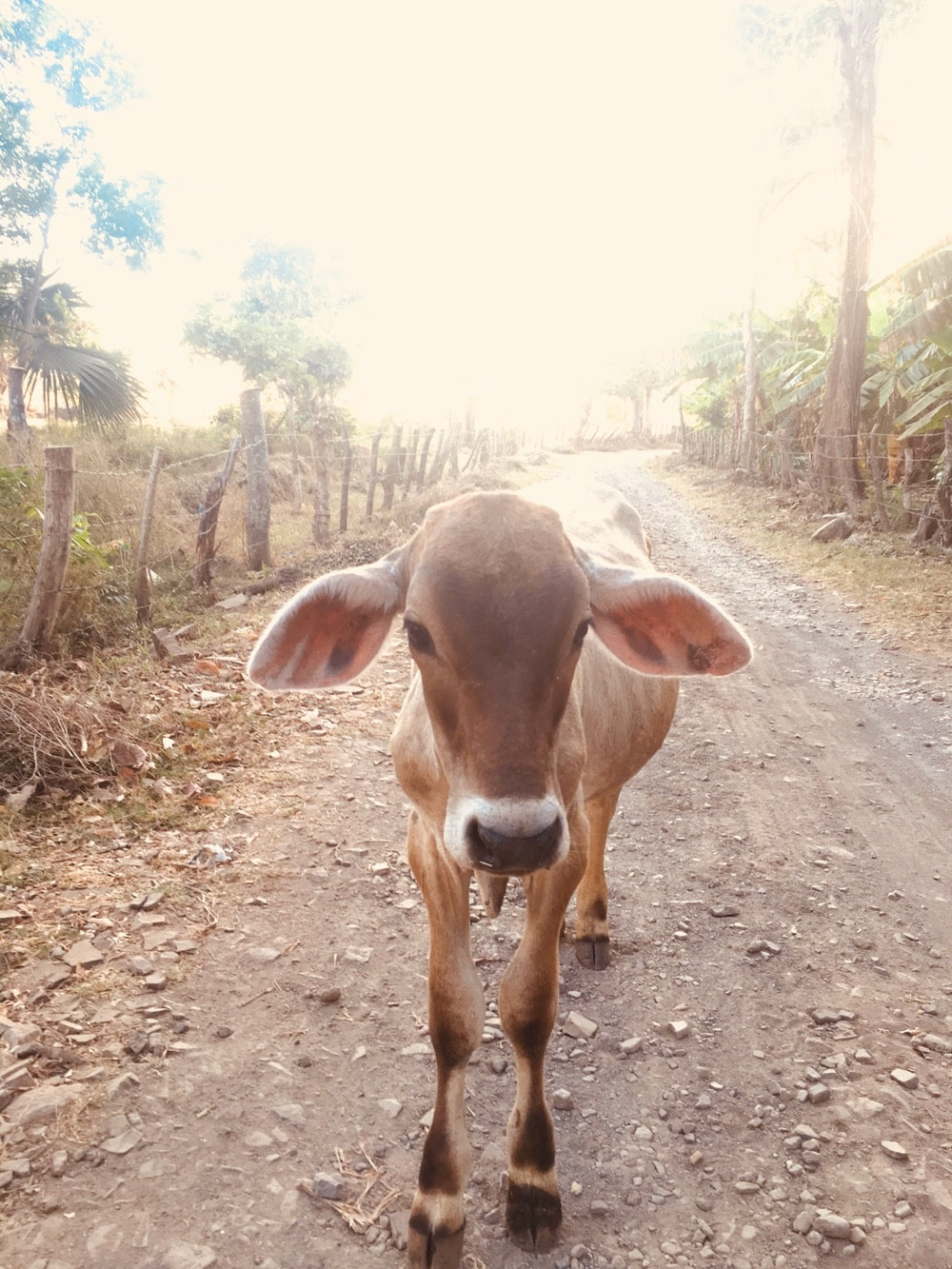 Hot local Nicaragua
